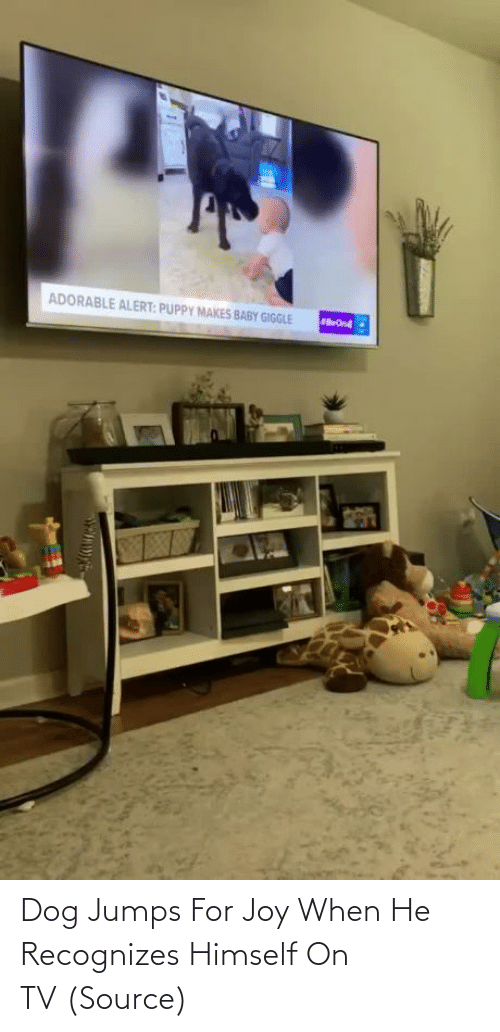 joy: Dog Jumps For Joy When He Recognizes Himself On TV (Source)