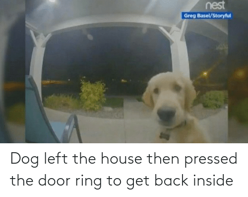The Door: Dog left the house then pressed the door ring to get back inside