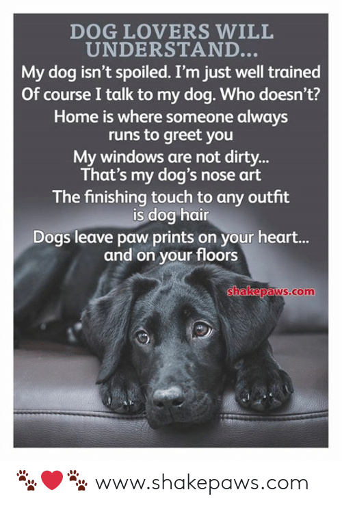 Lovers Will: DOG LOVERS WILL  UNDERSTAND  My dog isn't spoiled. I'm just well trained  Of course I talk to my dog. Who doesn't?  Home is where someone always  runs to greet you  My windows are not dirty..  That's my dog's nose art  The finishing touch to any outfit  is dog hain  Dogs leave paw prints on your heart...  and on your floors  hakepaws.com 🐾❤️🐾 www.shakepaws.com