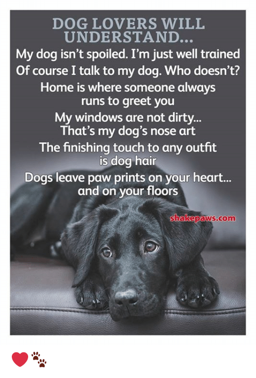 Lovers Will: DOG LOVERS WILL  UNDERSTAND...  My dog isn't spoiled. I'm just well trained  Of course I talk to my dog. Who doesn't?  Home is where someone always  runs to greet you  My windows are not dirty..  That's my dog's nose art  The finishing touch to any outfit  dog hair  Dogs leave paw prints on your heart..  and on your floors  shakepaws.com ❤️🐾