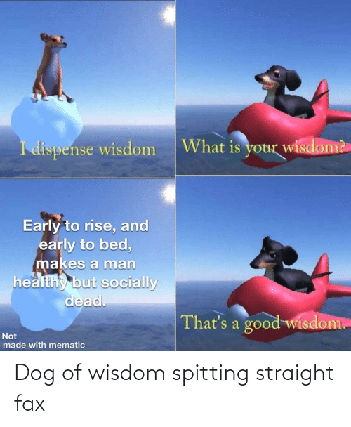 Wisdom: Dog of wisdom spitting straight fax