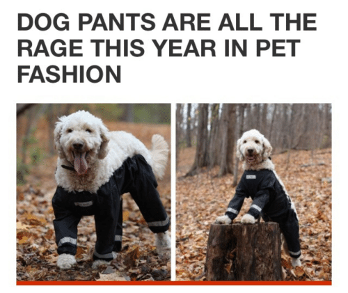 the rage: DOG PANTS ARE ALL THE  RAGE THIS YEAR IN PET  FASHION