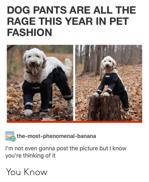 the rage: DOG PANTS ARE ALL THE  RAGE THIS YEAR IN PET  FASHION  the-most-phenomenal-banana  I'm not even gonna post the picture but I know  you're thinking of it You Know