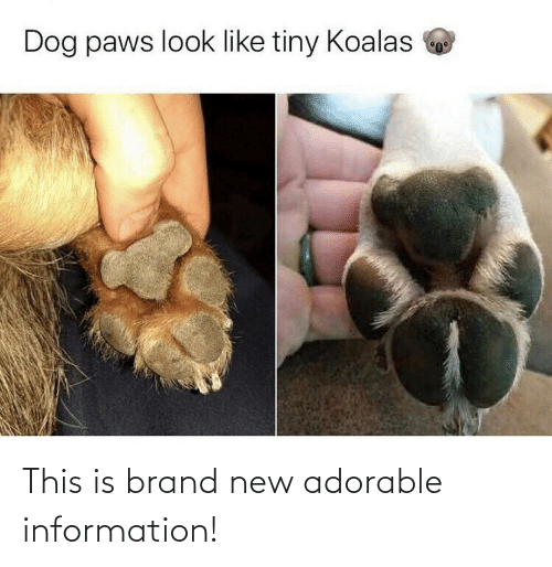Paws: Dog paws look like tiny Koalas This is brand new adorable information!