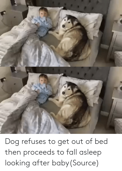 Dog: Dog refuses to get out of bed then proceeds to fall asleep looking after baby(Source)