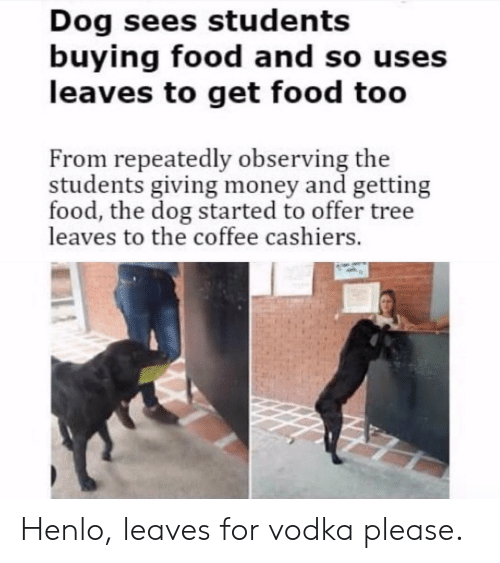 Food, Money, and Coffee: Dog sees students  buying food and so uses  leaves to get food too  From repeatedly observing the  students giving money and getting  food, the dog started to offer tree  leaves to the coffee cashiers Henlo, leaves for vodka please.
