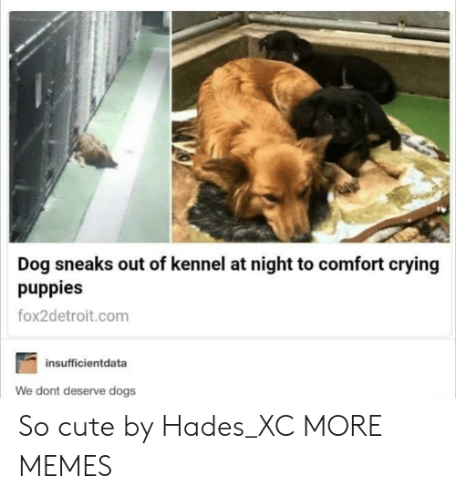Crying, Cute, and Dank: Dog sneaks out of kennel at night to comfort crying  puppies  fox2detroit.com  insufficientdata  We dont deserve dogs So cute by Hades_XC MORE MEMES