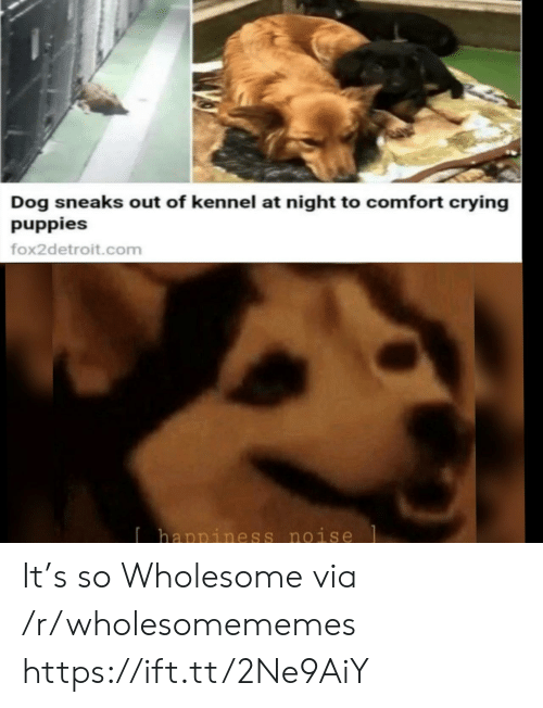 Crying, Puppies, and Wholesome: Dog sneaks out of kennel at night to comfort crying  puppies  fox2detroit.com  Ihappiness noise It's so Wholesome via /r/wholesomememes https://ift.tt/2Ne9AiY