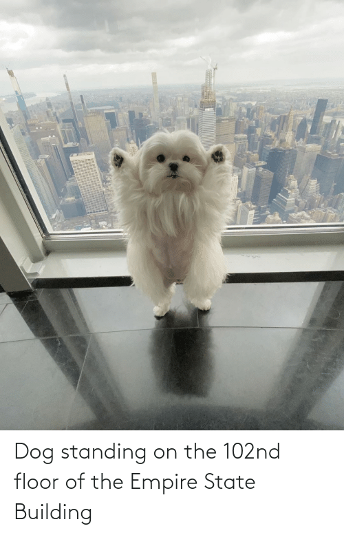 building: Dog standing on the 102nd floor of the Empire State Building
