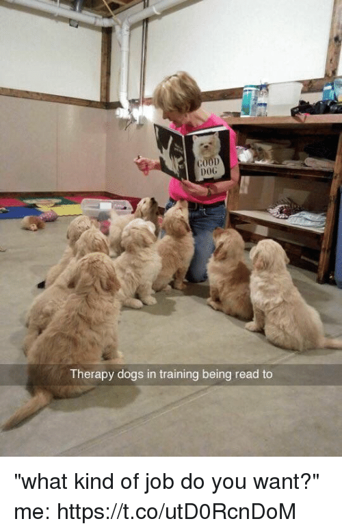 "Jobbed: DOG  Therapy dogs in training being read to ""what kind of job do you want?"" me: https://t.co/utD0RcnDoM"