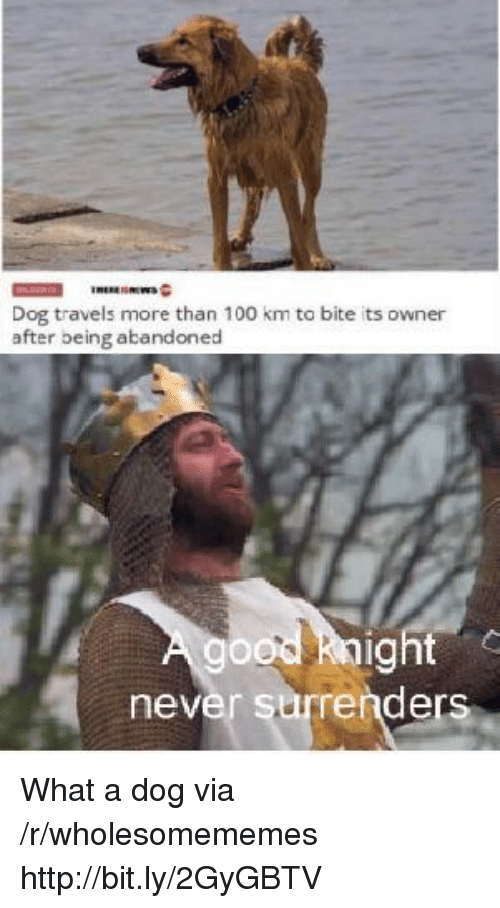 Anaconda, Http, and Never: Dog travels more than 100 km to bite its owner  after being abandoned  ig  never surrender What a dog via /r/wholesomememes http://bit.ly/2GyGBTV