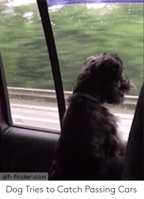 catch: Dog Tries to Catch Passing Cars