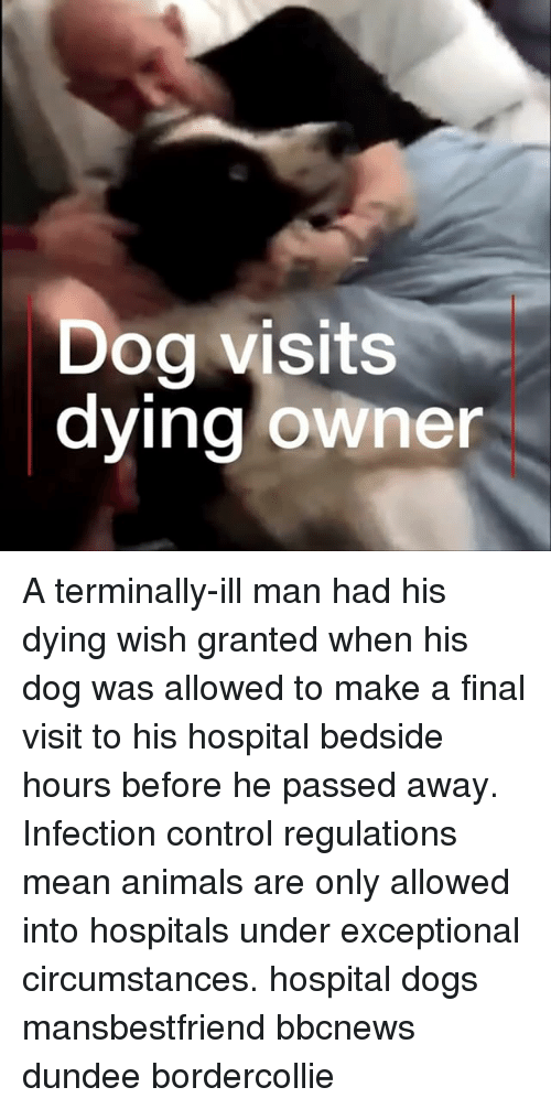 Animals, Dogs, and Memes: Dog visits  dying owner A terminally-ill man had his dying wish granted when his dog was allowed to make a final visit to his hospital bedside hours before he passed away. Infection control regulations mean animals are only allowed into hospitals under exceptional circumstances. hospital dogs mansbestfriend bbcnews dundee bordercollie
