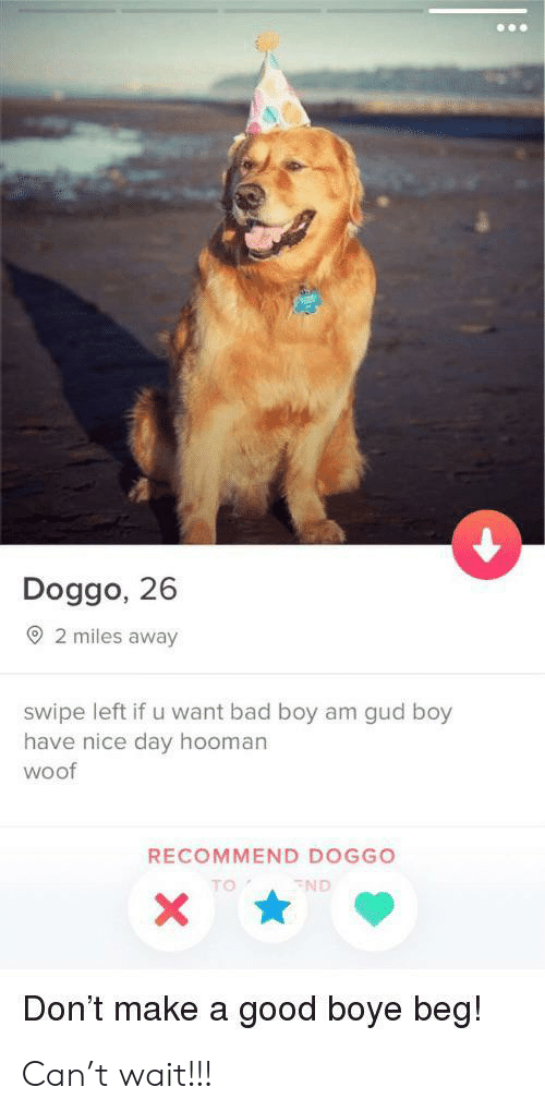 Bad, Good, and Nice: Doggo, 26  2 miles away  swipe left if u want bad boy am gud boy  have nice day hooman  woof  RECOMMEND DOGGO  TO  ND  Don't make a good boye beg! Can't wait!!!