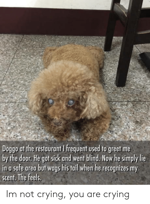 Frequent: Doggo af the restaurant I frequent used to greet me  by the door. He got sick and went blind. Now he simply lie  in a safe area but wags his tail whem he recognizes my  scent. The feels Im not crying, you are crying