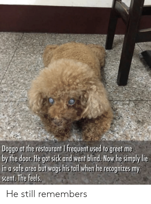 Frequent: Doggo at the restaurant I frequent used to greet me  by the door. He got sick and went blind. Now he simply lie  in a safe area buf wags his tail whem he recognizes my  scent. The feels. He still remembers