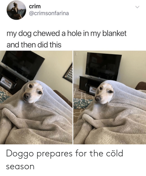 Season: Doggo prepares for the cöld season