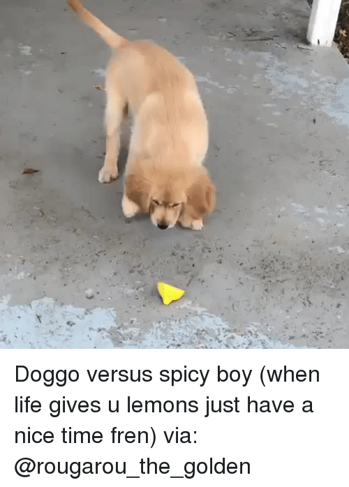 Instagram, Life, and Target: Doggo versus spicy boy (when life gives u lemons just have a nice time fren) via: @rougarou_the_golden