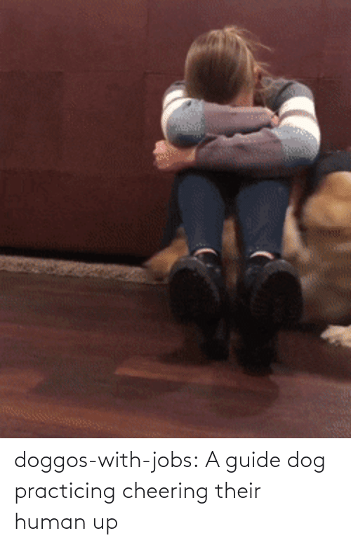 guide: doggos-with-jobs: A guide dog practicing cheering their human up