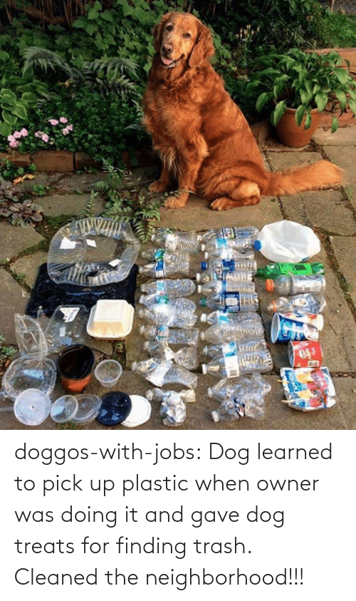 Jobs: doggos-with-jobs: Dog learned to pick up plastic when owner was doing it and gave dog treats for finding trash. Cleaned the neighborhood!!!