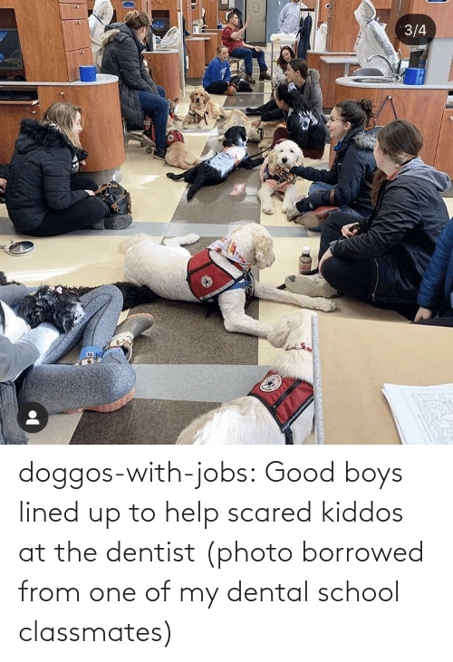 Jobs: doggos-with-jobs:  Good boys lined up to help scared kiddos at the dentist (photo borrowed from one of my dental school classmates)