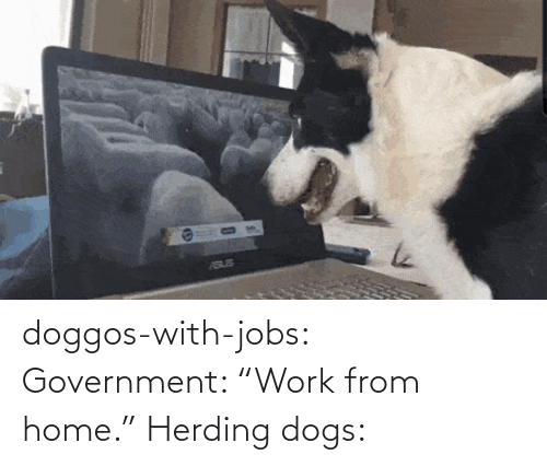 "Jobs: doggos-with-jobs:  Government: ""Work from home."" Herding dogs:"
