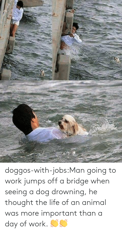 Jobs: doggos-with-jobs:Man going to work jumps off a bridge when seeing a dog drowning, he thought the life of an animal was more important than a day of work. 👏👏