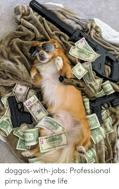 Jobs: doggos-with-jobs:  Professional pimp living the life