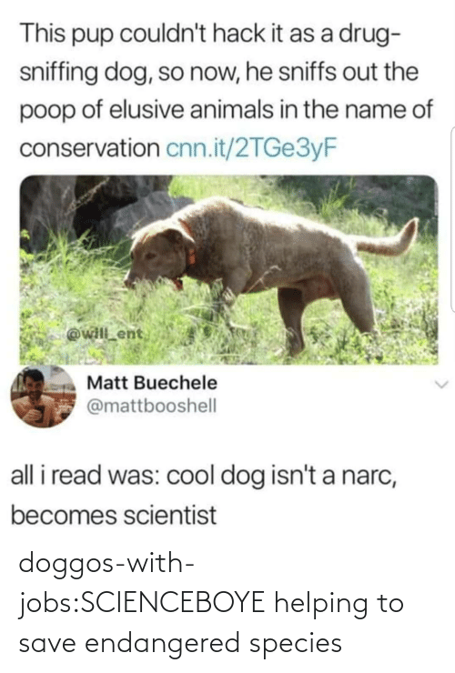 helping: doggos-with-jobs:SCIENCEBOYE helping to save endangered species