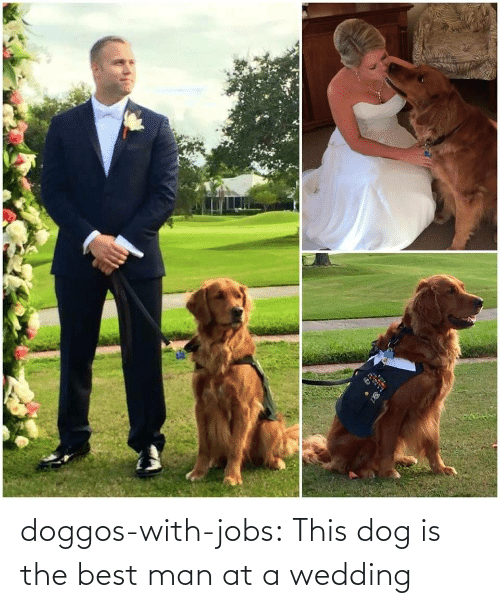 Jobs: doggos-with-jobs:  This dog is the best man at a wedding