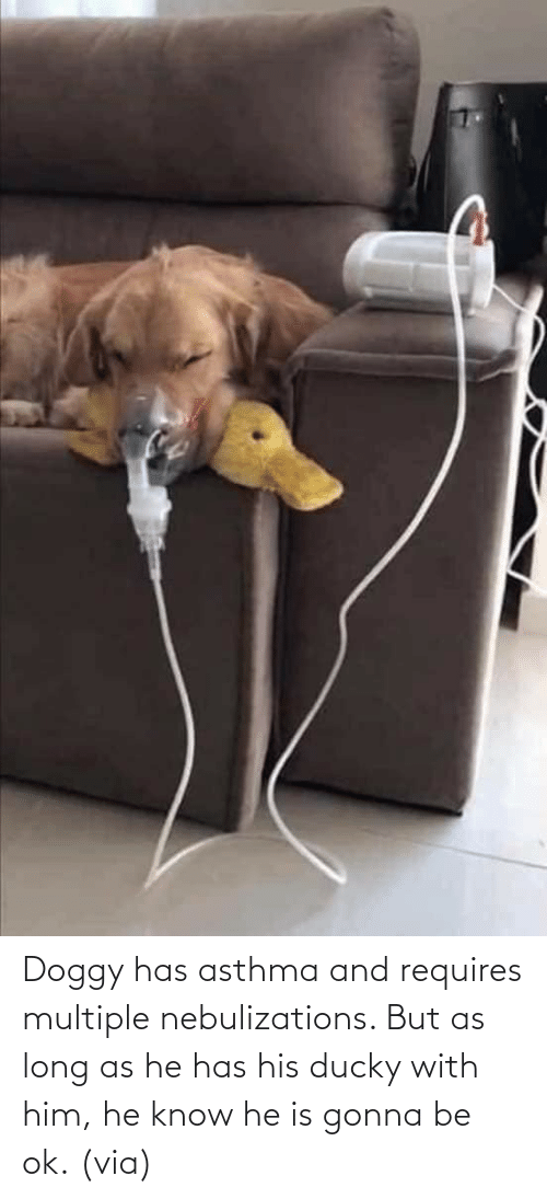 him: Doggy has asthma and requires multiple nebulizations. But as long as he has his ducky with him, he know he is gonna be ok. (via)