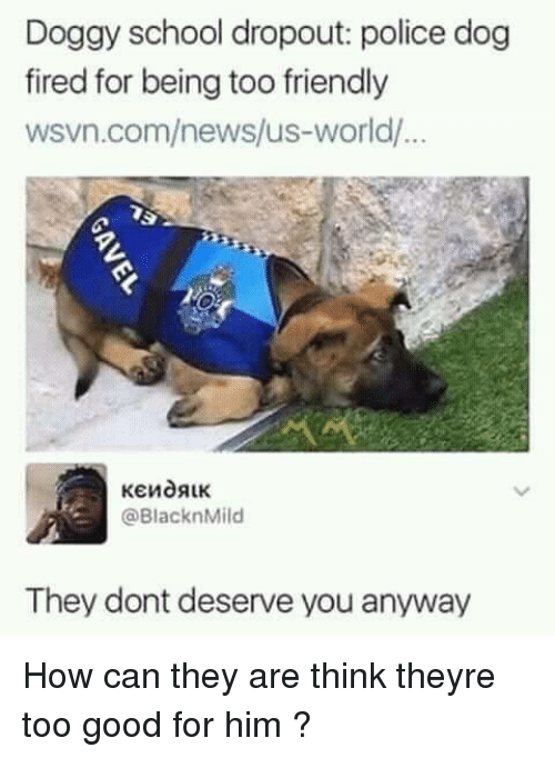 police dog: Doggy school dropout: police dog  fired for being too friendly  wsvn.com/news/us-world/  @BlacknMild  They dont deserve you anyway How can they are think theyre too good for him ?