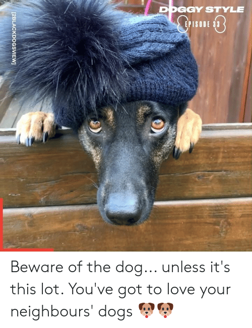 Dank, Doggy Style, and Dogs: DOGGY STYLE  EPISO  [2BLACKDOGSVIEW Beware of the dog... unless it's this lot. You've got to love your neighbours' dogs 🐶🐶