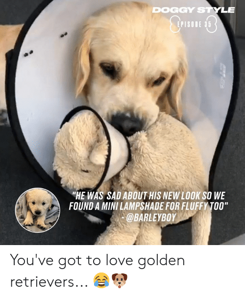 "doggy: DOGGY STYLE  EPISODE 35  ""HE WAS SAD ABOUT HIS NEW LOOK SO WE  FOUND A MINI LAMPSHADE FOR FLUFFY TOO""  @BARLEYBOY You've got to love golden retrievers... 😂🐶"