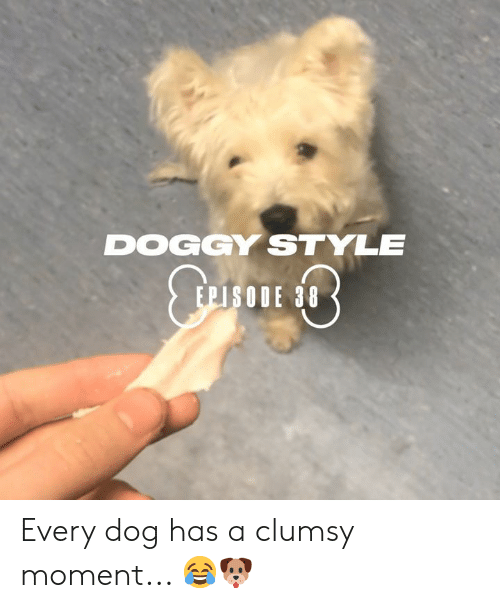 Dank, Doggy Style, and 🤖: DOGGY STYLE  EPISODE 38 Every dog has a clumsy moment... 😂🐶