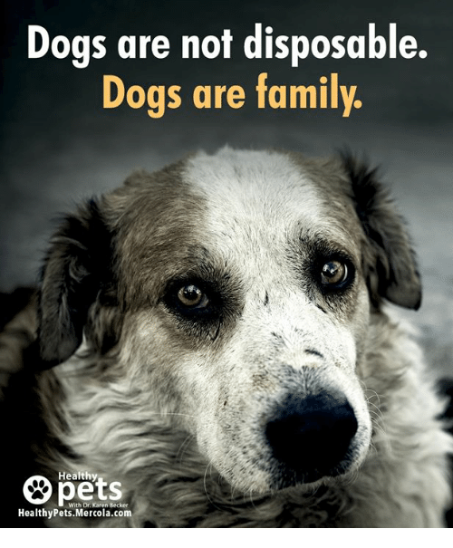 Dogs, Family, and Memes: Dogs are not disposable.  Dogs are family  Healthy  pets  With Dr. Karen Becker  HealthyPets.Mercola.com