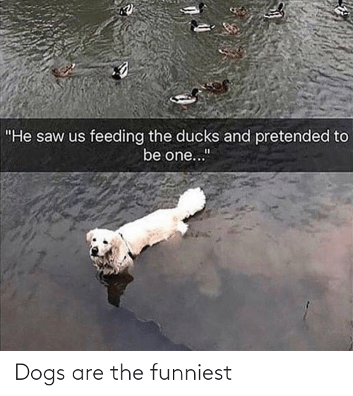 Dogs: Dogs are the funniest