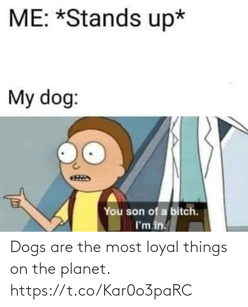 Dogs: Dogs are the most loyal things on the planet. https://t.co/Kar0o3paRC