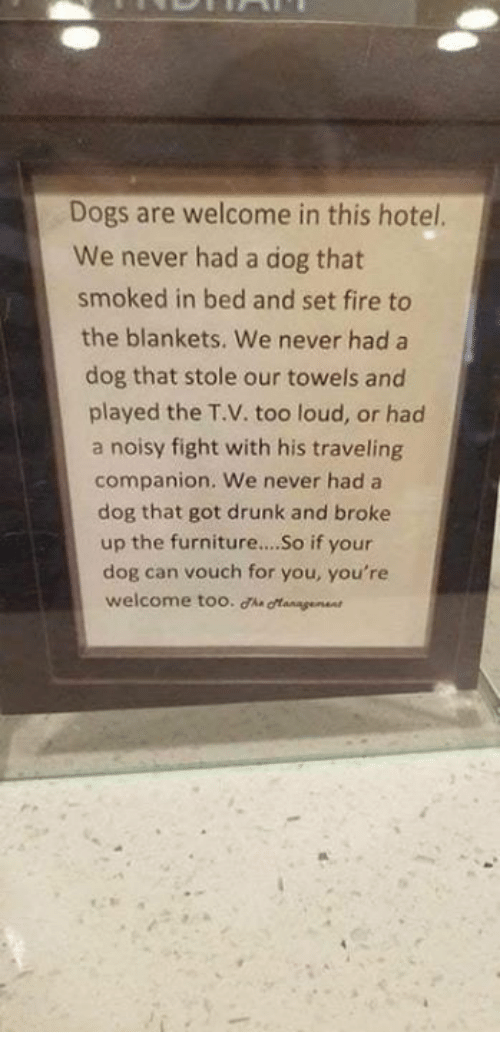 Dogs, Drunk, and Fire: Dogs are welcome in this hotel.  We never had a dog that  smoked in bed and set fire to  the blankets. We never had a  dog that stole our towels and  played the T.V. too loud, or had  a noisy fight with his traveling  companion. We never had a  dog that got drunk and broke  up the furniture...So if your  dog can vouch for you, you're  welcome too. ha gangeen