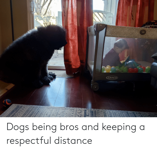 respectful: Dogs being bros and keeping a respectful distance