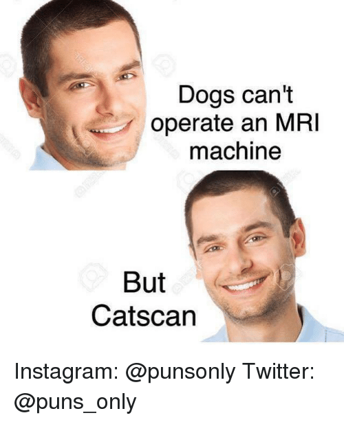 Catscane: Dogs can't  operate an MRI  machine  But  Catscan Instagram: @punsonly Twitter: @puns_only
