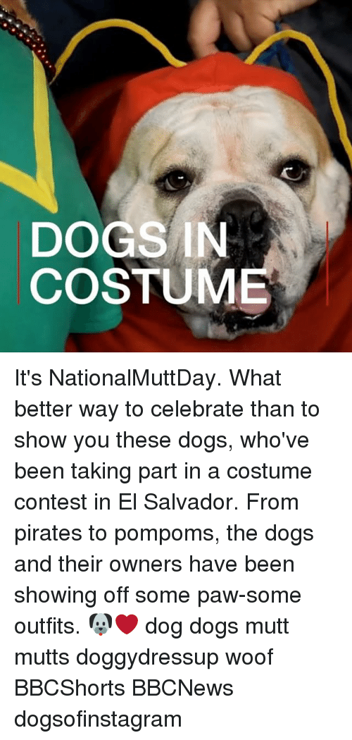 pawe: DOGS IN  COSTUME It's NationalMuttDay. What better way to celebrate than to show you these dogs, who've been taking part in a costume contest in El Salvador. From pirates to pompoms, the dogs and their owners have been showing off some paw-some outfits. 🐶❤️ dog dogs mutt mutts doggydressup woof BBCShorts BBCNews dogsofinstagram