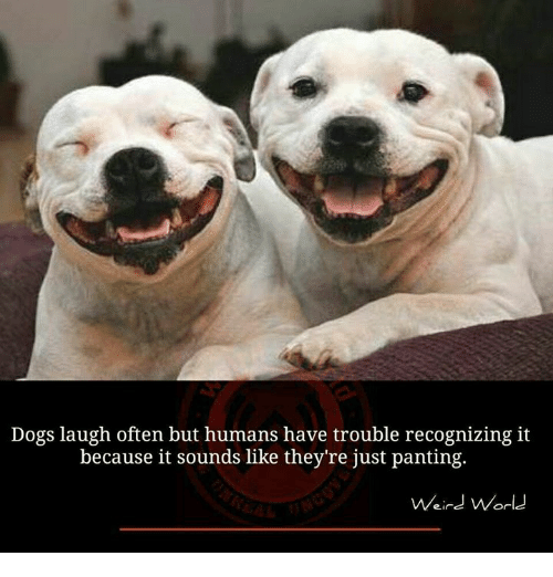Dog Laughing: Dogs laugh often but humans have trouble recognizing it  because it sounds like they're just panting.  Weird World