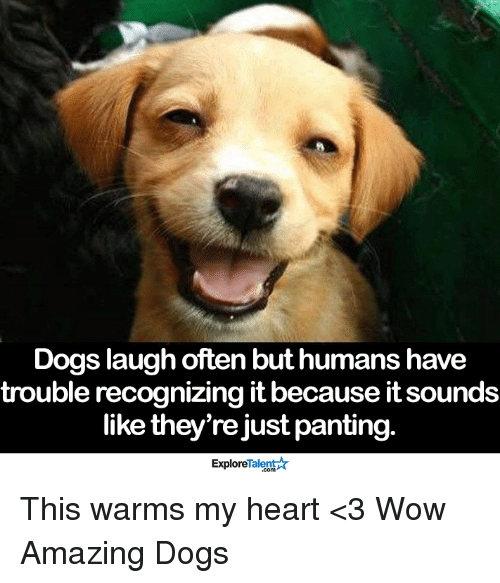 Dog Laughing: Dogs laugh often but humans have  trouble recognizing it because itsounds  like they're just panting.  TalentA  Explore This warms my heart <3  Wow Amazing Dogs