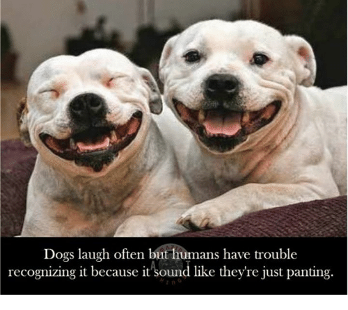 Dog Laughing: Dogs laugh often but humans have trouble  recognizing it because it sound like they're just panting.