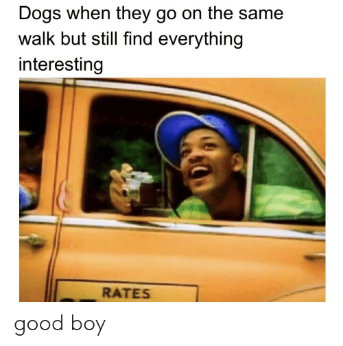 Dogs, Good, and Boy: Dogs when they go on the same  walk but still find everything  interesting  RATES good boy