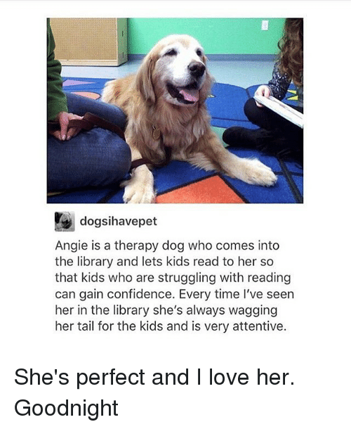 attentive: dogsihavepet  Angie is a therapy dog who comes into  the library and lets kids read to her so  that kids who are struggling with reading  can gain confidence. Every time I've seen  her in the library she's always wagging  her tail for the kids and is very attentive. She's perfect and I love her. Goodnight