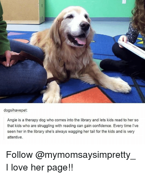 attentive: dogsihavepet:  Angie is a therapy dog who comes into the library and lets kids read to her so  that kids who are struggling with reading can gain confidence. Every time l've  seen her in the library she's always wagging her tail for the kids and is very  attentive Follow @mymomsaysimpretty_ I love her page!!