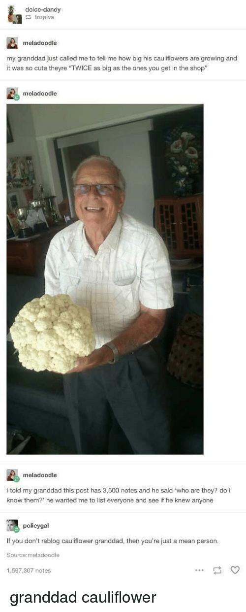 """Cute, Mean, and How: dolce-dandy  tropivs  meladoodle  my granddad just called me to tell me how big his cauliflowers are growing and  it was so cute theyre """"TWICE as big as the ones you get in the shop""""  meladoodle  meladoodle  i told my granddad this post has 3,500 notes and he said 'who are they? do i  know them? he wanted me to list everyone and see if he knew anyone  policygal  If you don't reblog cauliflower granddad, then you're just a mean person  Source:meladoodle  1,597,307 notes granddad cauliflower"""