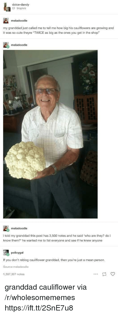 """Cute, Mean, and How: dolce-dandy  tropivs  meladoodle  my granddad just called me to tell me how big his cauliflowers are growing and  it was so cute theyre """"TWICE as big as the ones you get in the shop""""  meladoodle  meladoodle  i told my granddad this post has 3,500 notes and he said 'who are they? do i  know them? he wanted me to list everyone and see if he knew anyone  policygal  If you don't reblog cauliflower granddad, then you're just a mean person  Source:meladoodle  1,597,307 notes granddad cauliflower via /r/wholesomememes https://ift.tt/2SnE7u8"""